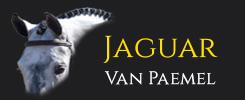 Jaguar van Paemel