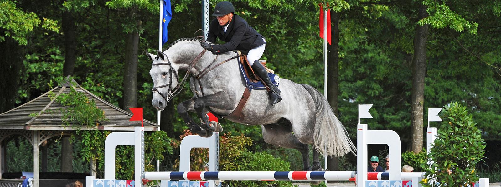 Jaguar van Paemel, showjumper stallion